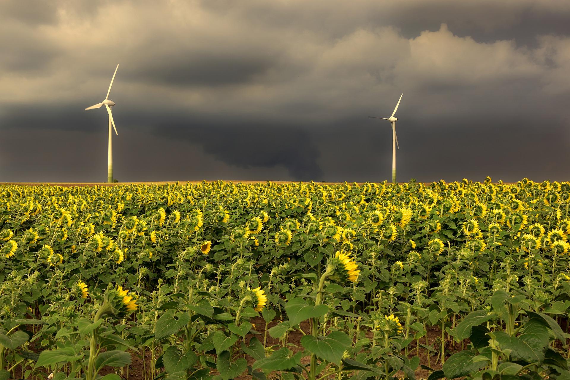 Fridays For Future – Klimaschutz oder Geschäftsmodell?